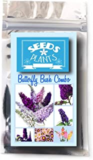 Bulk 4 Butterfly Bush Seeds 620 Seeds +4 Plant Markers & Free Snapdragons, Mums - Purples
