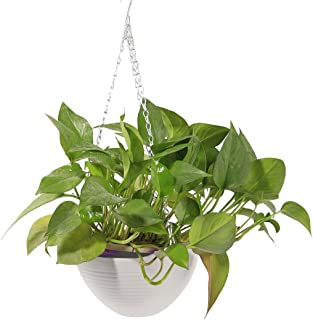 HMANE Hanging Flower Plant Pot, Chain Plastic Basket Planter Holder Patio Home Decoration - 7.87x7.87x5.51inch