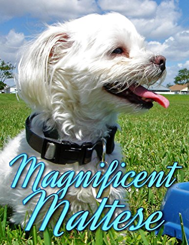 Magnificent Maltese (Dogs Picture Book - Precious Pooches 5) (English Edition)