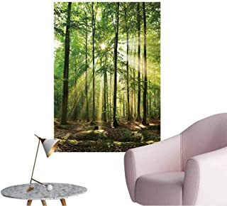 Vinyl Wall Stickers Beautiful Autumn Forest in Poland Perfectly Decorated,24