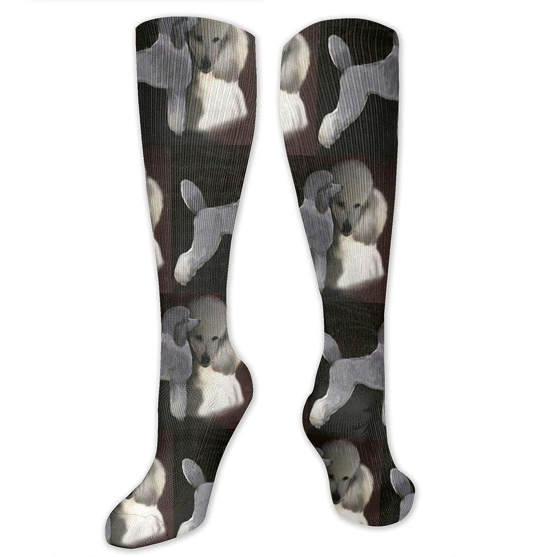 ホイットニー薬局失敗靴下,ストッキング,野生のジョーカー,実際,秋の本質,冬必須,サマーウェア&RBXAA Women's Winter Cotton Long Tube Socks Knee High Graduated Compression Socks Poodles in Grey and White Socks
