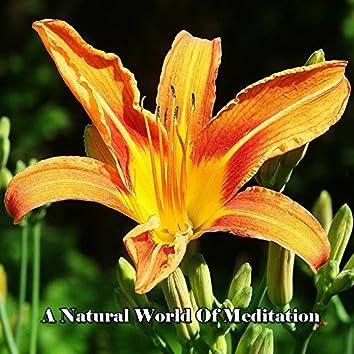 A Natural World Of Meditation