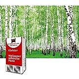 GREAT ART Papel tapiz fotográfico Decoración de Pared Bosque de Abedul - Paisaje Árboles 210 x 140 cm - Papel Pintado 5 Piezas incluye Pasta para pegar