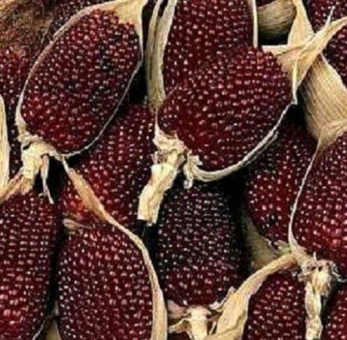 200 graines de maïs aux fraises ornementales Semences du maïs d'ornement POPCORN GRAINES