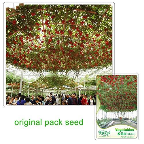 6 particules/sac d'emballage d'origine tomate Graines Arbre Jardin potager d'ornement Plantation Graines tomates