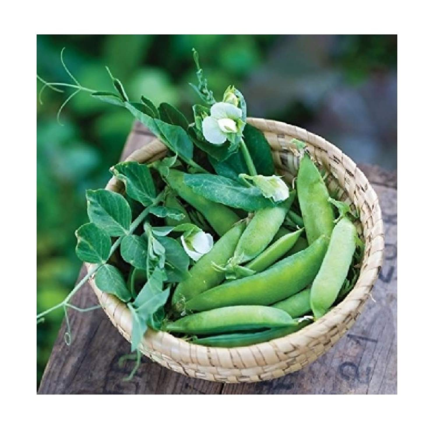 David's Garden Seeds Pea Sugar Ann SL5594 (Green) 100 Non-GMO, Heirloom Seeds