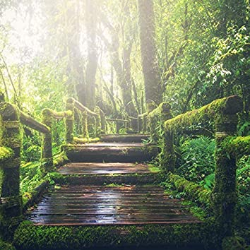 Spa Sonidos de la Naturaleza, Relax
