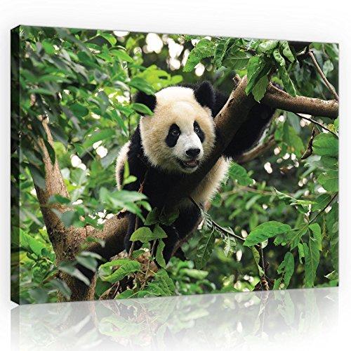 FORWALL Bilder Canvas Panda-Bär auf dem Baum O1 (100cm. x 75cm.) Leinwandbilder Wandbild AMFPP10238O1