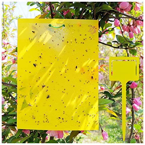 20 Sheets Yellow Fruit Fly Traps, 8x6 Inches, Plastic Sheet Fly Traps for Mosquitoes, Fungus Gnats, White Flies, Indoor and Outdoor