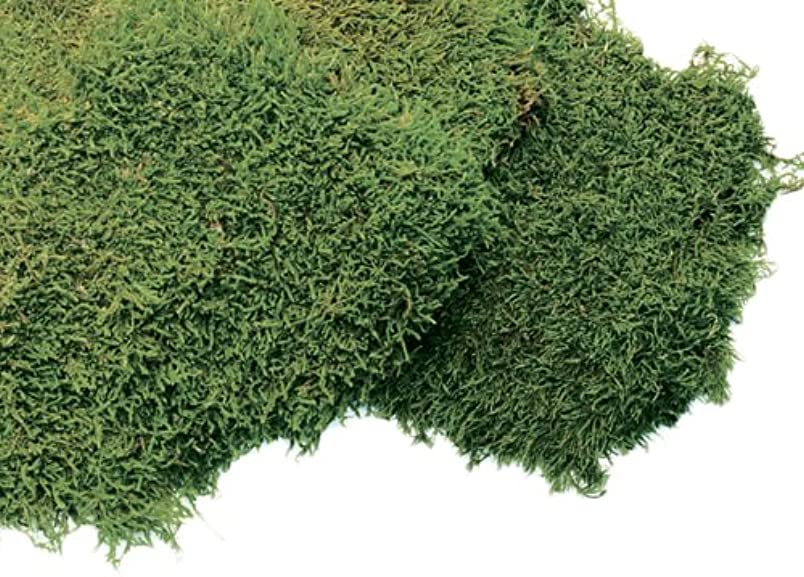 Super Moss 21551 Preserved Sheet Moss, Fresh Green, 4-Ounce sy591164835