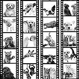 murando Papel Pintado PURO 10m Fotomurales tejido no tejido rollo Decoración de Pared decorativos Murales XXL moderna de Diseno Fotográfico Animal Gato Perro Caballo Cerdo Conejo g-C-0026-j-d