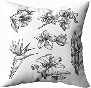 Musesh Christmas Pillow Covers,Seasonal Tropical Flowers Set Sketch Tropic Nature and Floral Design Elements Hibiscus Plumeria Lily Calla Orchid Isolated White 20X20Inch for Sofa Pillowcase