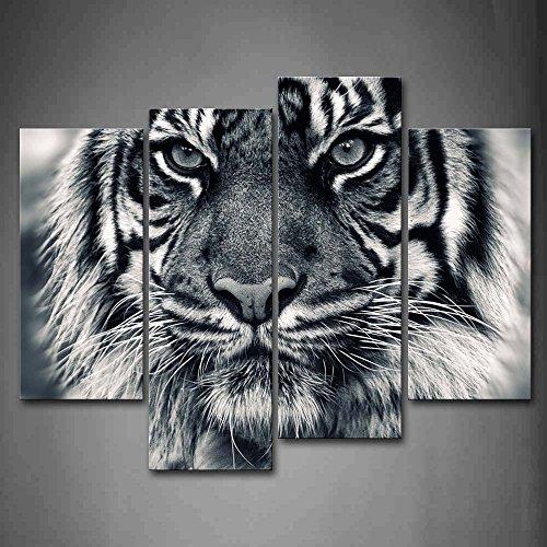 First Wall Art Cuadro de Pared con diseño de Tigre Blanco y Negro con Ojos Mirando y Barba, impresión de imágenes sobre Lienzo, Animales, la Imagen para 🔥