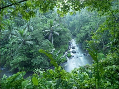 Acrylglasbild 130 x 100 cm: Tropischer Dschungel von xPACIFICA/National Geographic - Wandbild, Acryl Glasbild, Druck auf Acryl Glas Bild