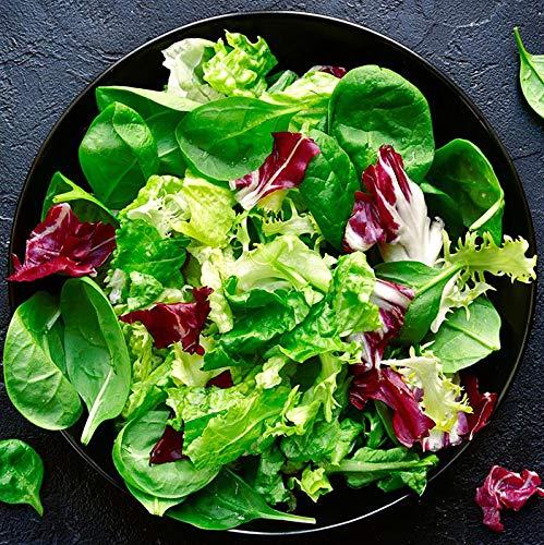 Salatmischung Misticanza - Salat - Mischung - 500 Samen