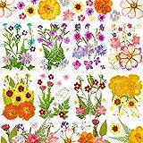 8 Juegos Flores Secas Flores Prensadas Naturales para DIY Velas Joyería de Resina Uñas Colgantes Manualidades Adornos Florales