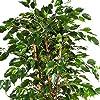 artplants.de Ficus Exotica Artificiale, in Vaso, 880 Foglie, Verde, 150cm - Pianta Tropicale/Ficus Decorativo #1