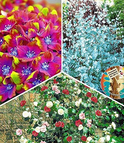 BALDUR-Garten Winterharte Gartenpflanzen Raritäten-Kollektion