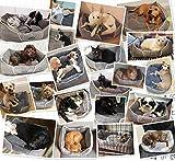 Zoom IMG-2 pecute cuccia gatto letto per