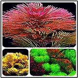 Plantas de acuario artificiales 1000 PCS Semillas de plantas de acuario Semillas Raras Plantas Decoración de tanques de peces acuáticos Árboles Semillas Pino para el paisaje del tanque de peces (Color