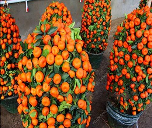 citrus plant ikea eetbaar