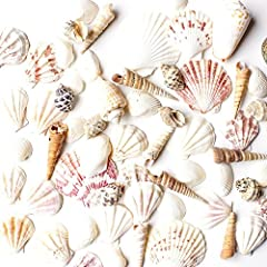 A beautiful assortment of various sized shells ranging from conchas to teeny tiny micro shells that compliment any design scheme with its warm neutral orange, pinks, brown and grey color tones. Fill your favorite beach buckets, beach toys. Spread a f...