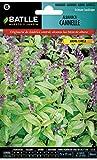 Semillas Aromáticas - Albahaca Cannelle - Batlle