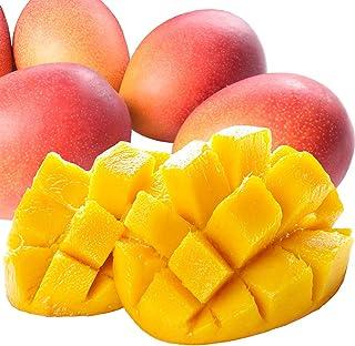国華園 宮崎産 ご家庭用マンゴー 1㎏ 1箱 冷蔵便 訳あり ふぞろい 南国フルーツ
