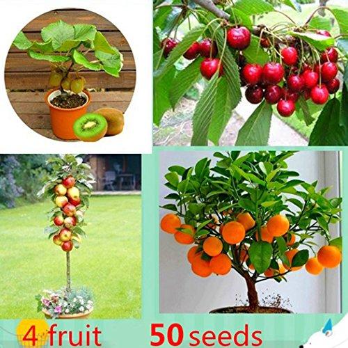 SOTEER Bonsai Obst baum Mini Actinidia chinensis Kirschebaum Apfelbaum Citrusbaum Gemischtbaum Samen, 50 Stück/Pack, Bonsai geeignet
