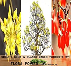 Asiatic Dogwood Seed - Japanese Cornel Dogwood SEEDS - Cornus officinalis - MEDICINAL PLANT - Colorful Exfoliating Bark - ZONES 5 - 9 - Tree Seeds from Flora Power by Red Pine, Inc. (0020 Seeds - Pkt. Size)