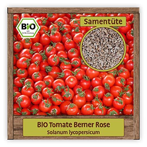 BIO Tomaten Samen Fleischtomate Saatgut Gemüsesamen alte historische Sorte Berner Rose