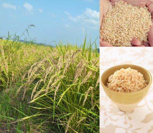 千葉県産 多古米 玄米 こしひかり 5kg×2袋 令和3年産 新米 幻の米 加藤さんの多古米(東佐野産)