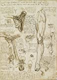 World of Art Global Vintage Anatomie Leonardo da Vinci