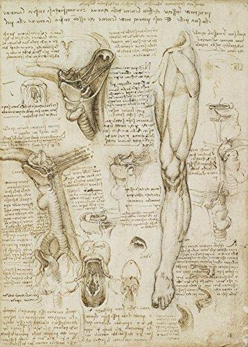 World of Art Global Vintage Anatomie Leonardo da Vinci Lernen von Kehlkopf und Bein, Italien, 14-15 Jahrhundert. 250 g/m², glänzend, Kunstdruck, A3, Reproduktion