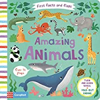 Amazing Animals (First Facts and Flaps)
