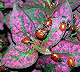 1500 Live Ladybugs + Nature Nectar Guaranteed Live Delivery Best Gift Garden