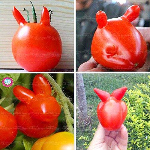 100pcs Lapin Graines de tomate, énorme, riche saveur, le plus grand légumes graines biologiques de tomates boeuf jardin pot au monde