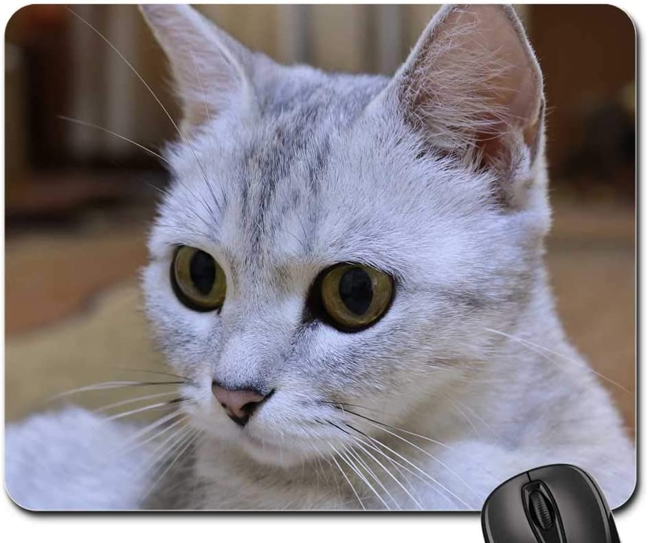 Mouse Pad - Cat Animals Pet Eyes Cats Recommendation Eye New sales Snout