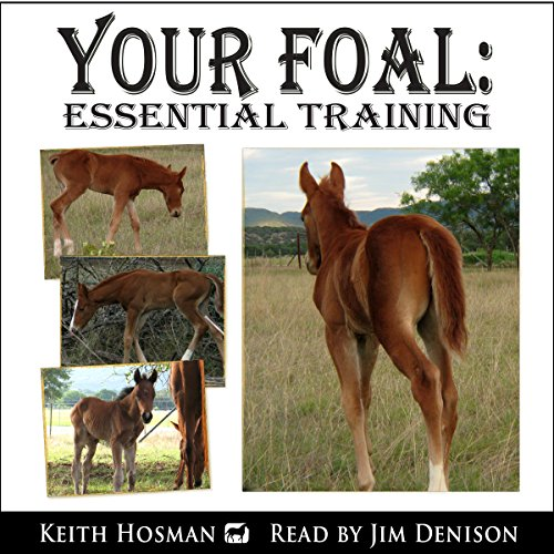 Your Foal cover art