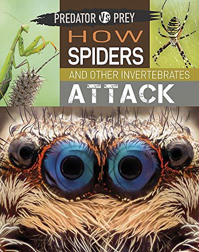 How Spiders and other Invertebrates Attack (Predator vs Prey)