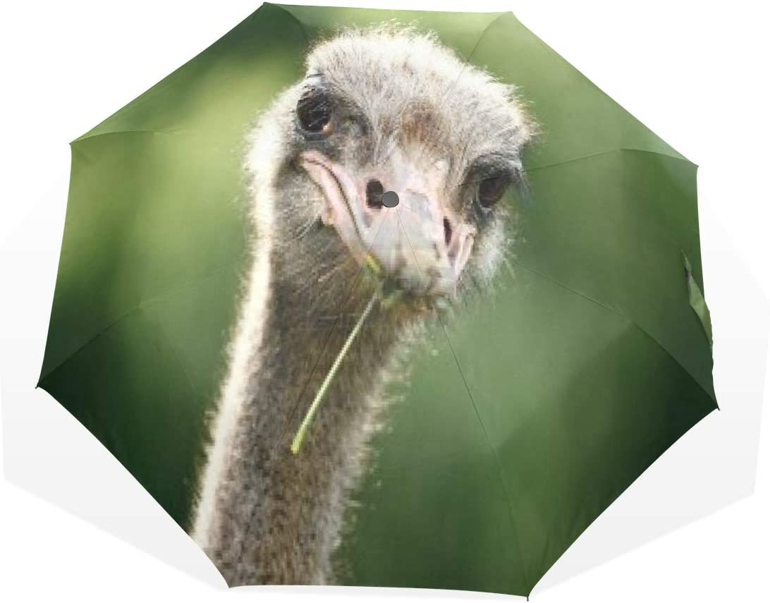 HangWang Factory outlet Umbrella Ostrich Pictures Travel Windproo Sun Free Shipping Cheap Bargain Gift Golf Rain
