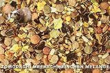 Meerschweinfutter pelletfrei, Nagerfutter, natürliche Nagerfuttermischung mit Möhrenflocken, Erbsenflocken, Erdnüssen, Sonnenblumenkernen, Kardi, Maisflocken und Kräutern – leckerer bunter Knabbermix, Alleinfutter für Meerschweinchen, Rundum-Sorglos Futtermischung Tomodachi Meerschweinchen Melange 5kg Eimer - 4
