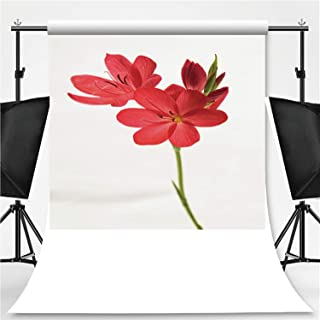 Bunch of Kaffir Lilies Isolated on White Photography Backdrop,104127 for Photo Studio,Flannelette:6x10ft