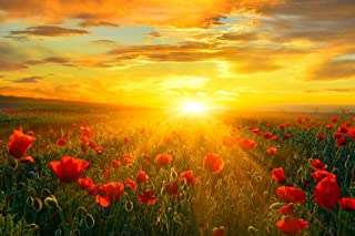 Bright New Day Field of Poppies at Sunrise Landscape Photo Art Print Laminated Dry Erase Sign Poster 18x12