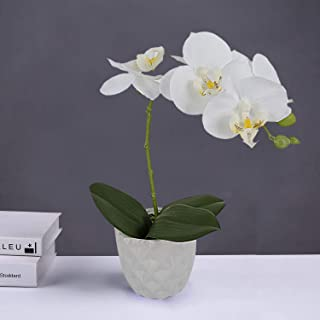 LIVILAN White Silk Artificial Orchids Arrangements with Ceramic Vase for Decoration Fake Flowers for Table Centerpiece Home Decor Office Wedding Party Vivid Lifelike