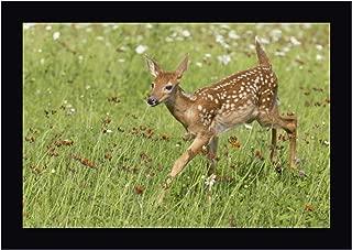 Minnesota White-Tailed Deer Fawn in Meadow by Wendy Kaveney 24