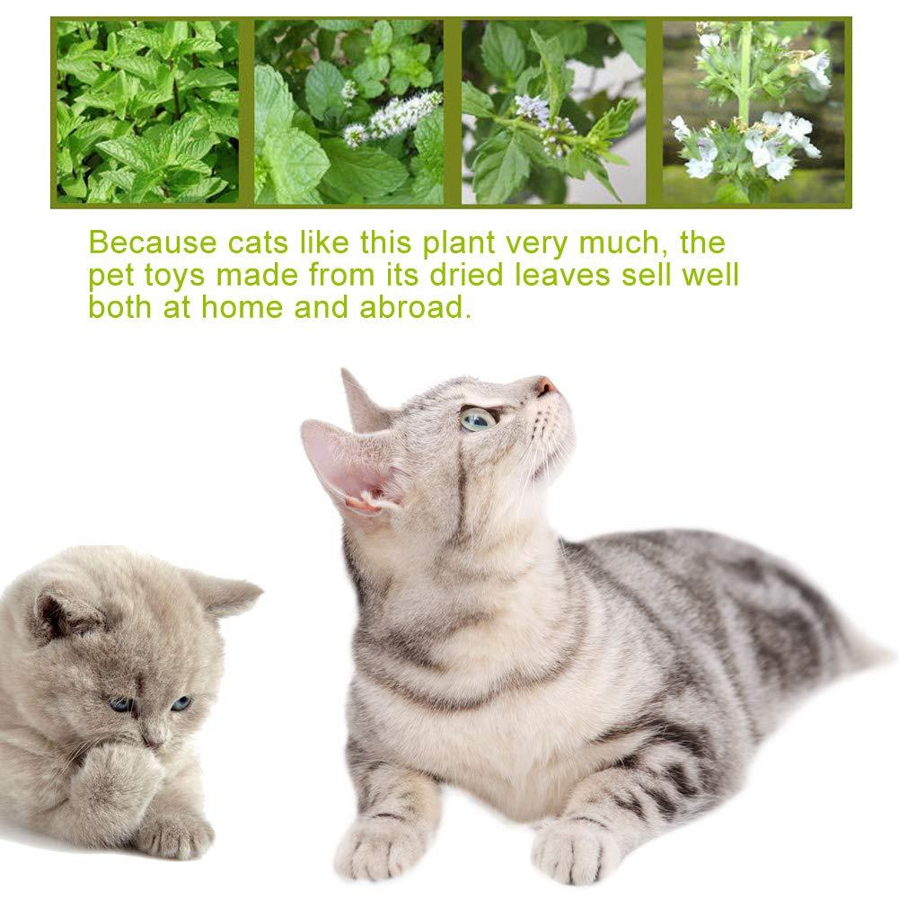 Chuanglan Pure Catnip - Ratón para Gatos (2 Unidades, 5,5 cm): Amazon.es: Productos para mascotas