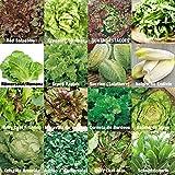 verschiedene Salate Saat 16 x 100 Saatgut Salat Mix 100%