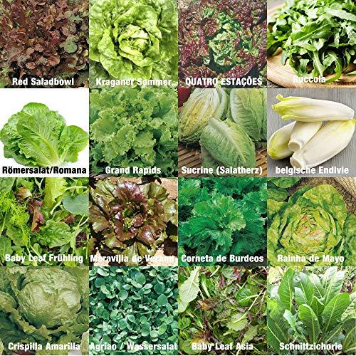 verschiedene Salate Saat 100