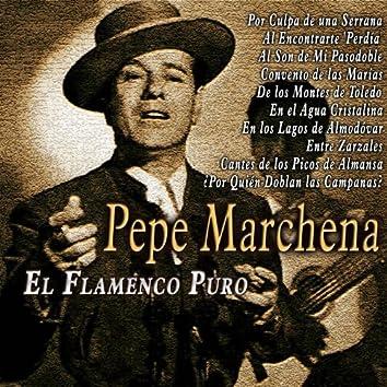 El Flamenco Puro
